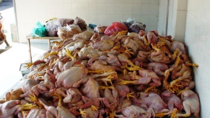 Tiêu hủy thực phẩm không qua kiểm dịch